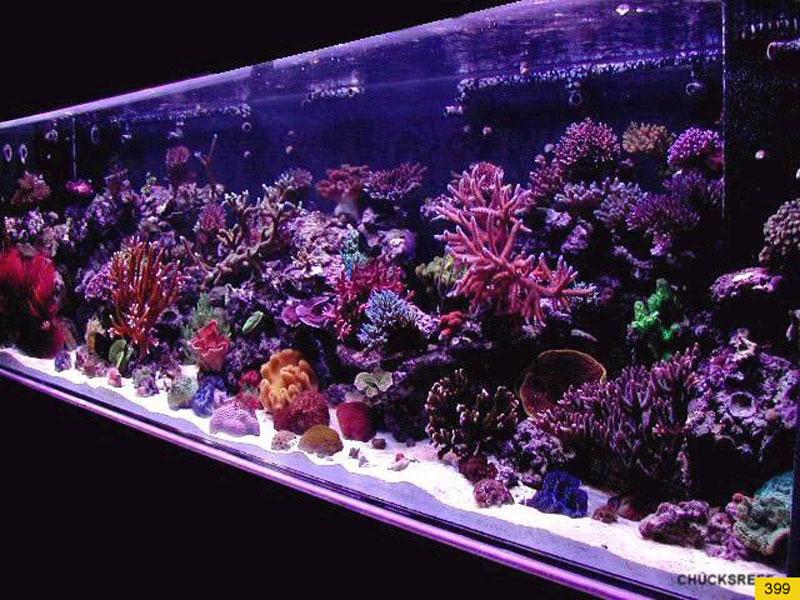 aquariumscabinets11
