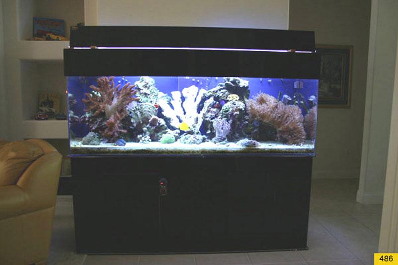 Aquarium Tanks Related Keywords & Suggestions - Acrylic Aquarium Tanks ...