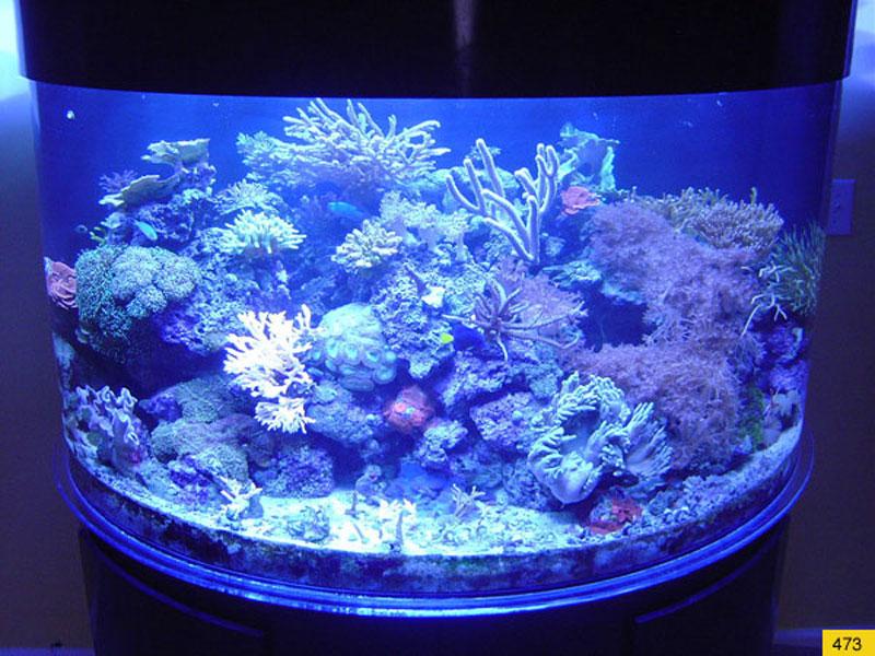 aquariumscabinets15
