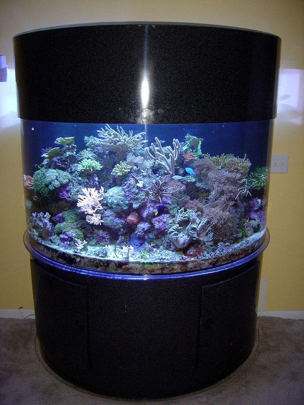 aquariumscabinets49
