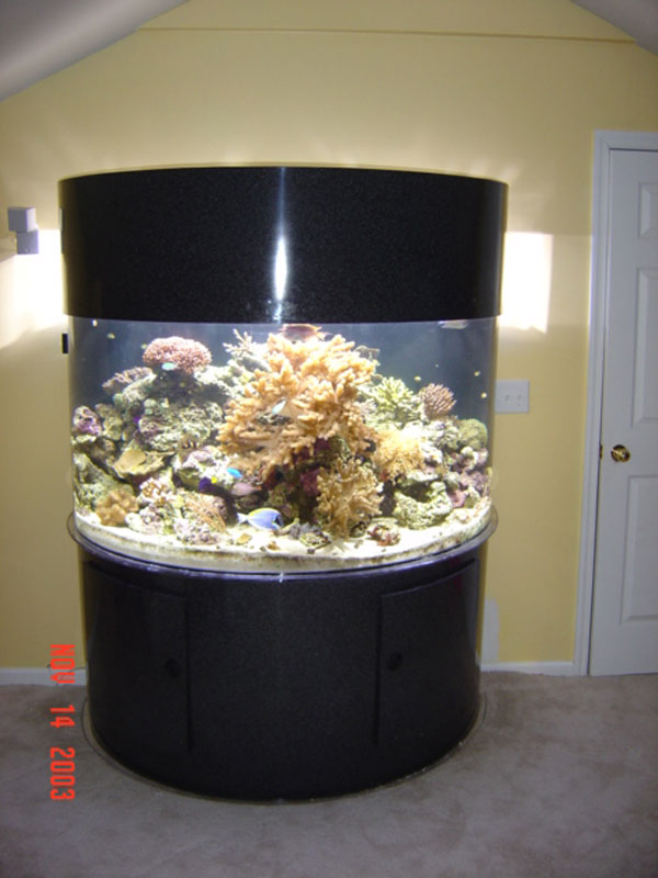 Photo Gallery of Acrylic Fish Tanks and Aquariums with Cabinetry