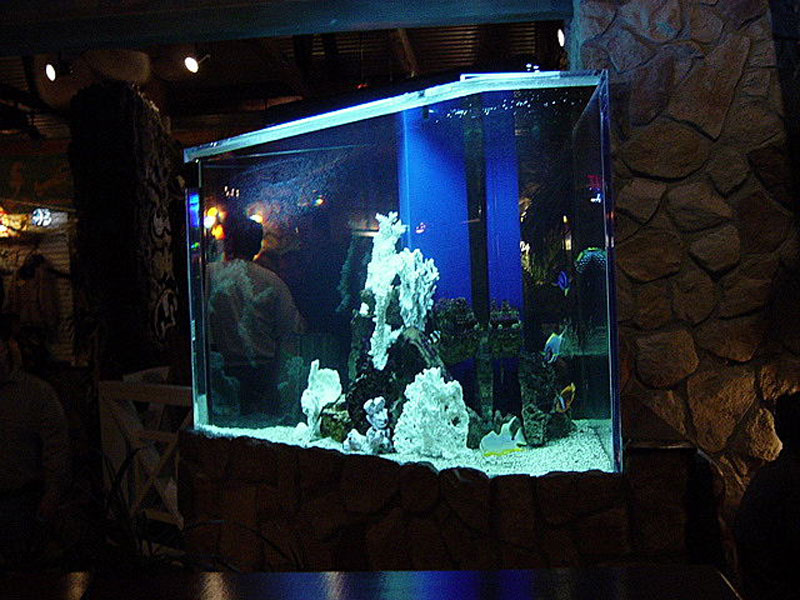 Custom Acrylic Aquariums : Photo Gallery of Acrylic Fish Tanks and Aquariums with Cabinetry