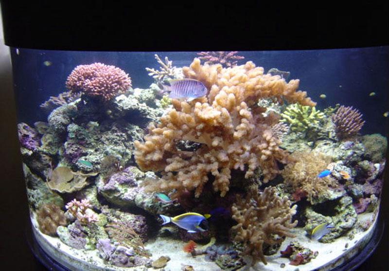 aquariumscabinets6