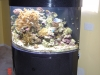 aquariumscabinets60
