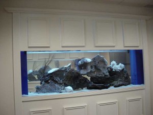 Cabinetry for built in Aquarium