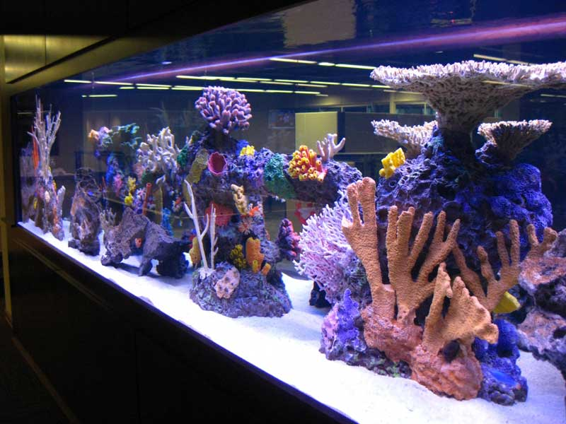 Artificial Aquarium Inserts after Installation