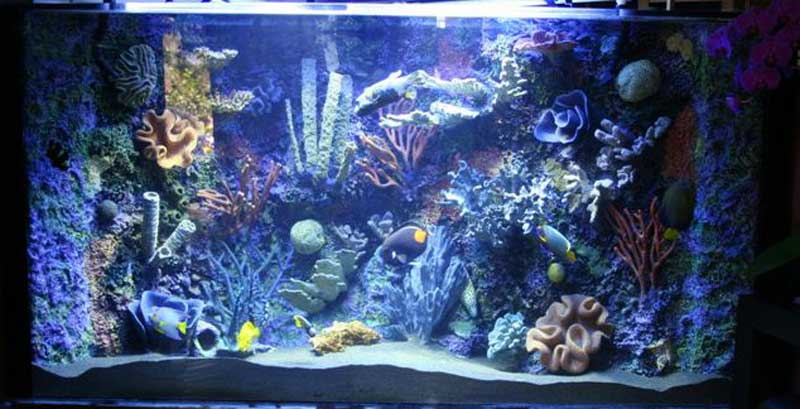 Backdrop Aquarium Insert