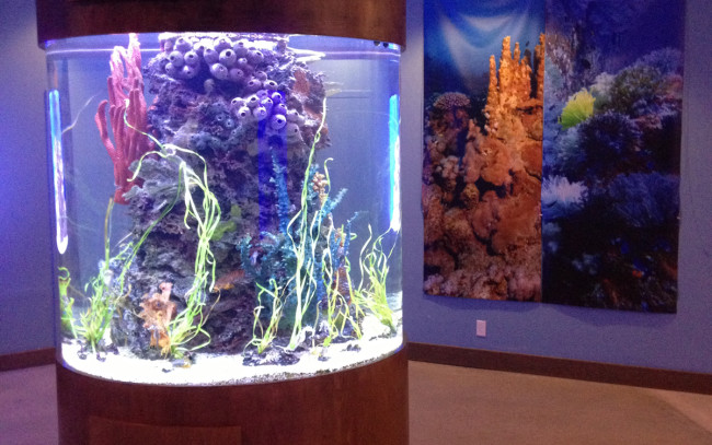 Custom Acrylic Aquariums, Acrylic Tank Manufacturing as seen on Tanked